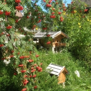 casa-campestrin-2006-019